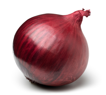 Red onion on white. This file includes clipping path.