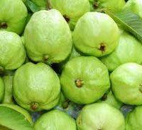 Guava -koyya